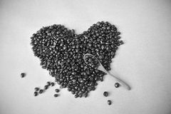 Φασόλια καφέ, γραπτό υπόβαθρο Στοκ εικόνα με δικαίωμα ελεύθερης χρήσης