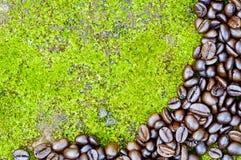 Φασόλια καφέ στην επιφάνεια βρύου Στοκ Φωτογραφία