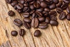 Φασόλια καφέ στο δάσος Στοκ Εικόνα