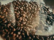 Φασόλια καφέ στο πλαστικό εμπορευματοκιβώτιο Στοκ Φωτογραφίες