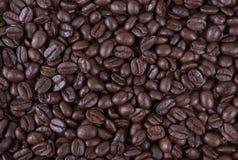Φασόλια καφέ, arabica ψητού καλύτερος καφές της Ταϊλάνδης καφέ Στοκ Φωτογραφία