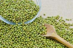 φασόλια πράσινο mung Στοκ Εικόνα