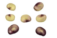 Φασόλια σπόρων στοκ εικόνες