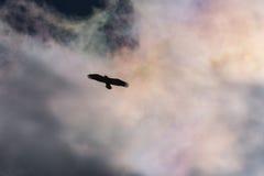Φαλακρή σκιαγραφία αετών Στοκ φωτογραφία με δικαίωμα ελεύθερης χρήσης