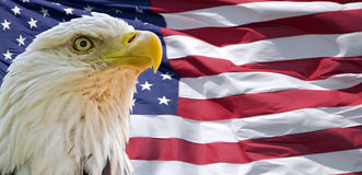 Φαλακροί αετός και αμερικανική σημαία Στοκ Φωτογραφία