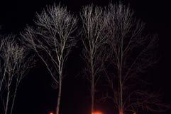 Φαλακροί κλάδοι το χειμώνα σε ένα μαύρο υπόβαθρο στοκ φωτογραφίες