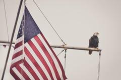 Φαλακρός αετός σε έναν ιστό με τη σημαία 2 Στοκ Εικόνες