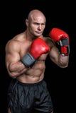 Φαλακρός μπόξερ με τα κόκκινα γάντια Στοκ φωτογραφία με δικαίωμα ελεύθερης χρήσης