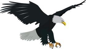 φαλακρό διάνυσμα αετών στοκ φωτογραφία με δικαίωμα ελεύθερης χρήσης