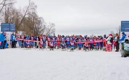 11 Φεβρουαρίου 2017 ετήσιος μαραθώνιος σκι Russialoppet Nikolov Perevoz 2017 φυλών σκι κτημάτων τέχνη-Veretevo Φυλή Paralympic Στοκ Εικόνα