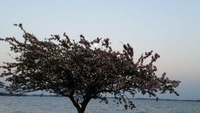 Φεγγάρι δέντρων Στοκ εικόνες με δικαίωμα ελεύθερης χρήσης