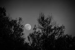 Φεγγάρι αύξησης Στοκ Εικόνα