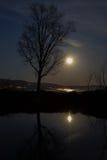 Φεγγάρι και δέντρο Στοκ Εικόνες