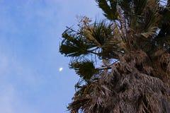 Φεγγάρι μεσημβρίας Στοκ φωτογραφία με δικαίωμα ελεύθερης χρήσης