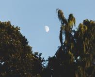 Φεγγάρι μεταξύ των κλάδων Στοκ Φωτογραφίες