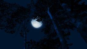 Φεγγάρι πίσω από τα ψηλά δασικά δέντρα στον αέρα φιλμ μικρού μήκους