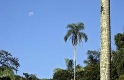 Φεγγάρι που πλαισιώνεται από το δάσος φοινικών Στοκ Φωτογραφίες