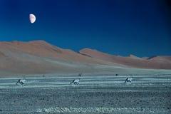 φεγγάρι που τρέχει κάτω Στοκ εικόνες με δικαίωμα ελεύθερης χρήσης