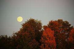 Φεγγάρι πτώσης Στοκ φωτογραφία με δικαίωμα ελεύθερης χρήσης