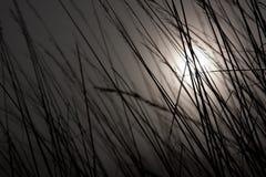 φεγγάρι χλόης Στοκ Φωτογραφίες