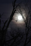 Φεγγάρι λύκων με τους γυμνούς κλάδους, κάθετη εικόνα Στοκ Εικόνα