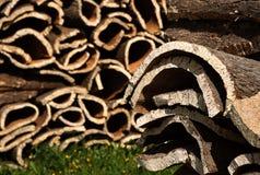 φελλός 2 φλοιών Στοκ εικόνα με δικαίωμα ελεύθερης χρήσης
