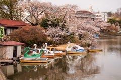 Φεστιβάλ ανθών κερασιών στο πάρκο του Τακαμάτσου, Μοριόκα, Iwate, Tohoku, Ιαπωνία σε April27,2018: Ποδήλατα νερού και βάρκες κουπ Στοκ Φωτογραφία
