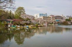 Φεστιβάλ ανθών κερασιών στο πάρκο του Τακαμάτσου, Μοριόκα, Iwate, Tohoku, Ιαπωνία σε April27,2018: Ποδήλατα νερού και βάρκες κουπ Στοκ Φωτογραφίες