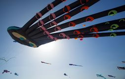 Φεστιβάλ ικτίνων Fuerteventura Στοκ Εικόνες