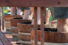 Φεστιβάλ συγκομιδών συντριβής κρασιού στο Carlton Όρεγκον Στοκ φωτογραφίες με δικαίωμα ελεύθερης χρήσης