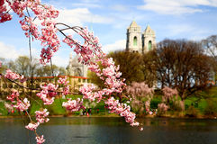 φεστιβάλ Τζέρσεϋ κερασιών ανθών νέο Στοκ εικόνα με δικαίωμα ελεύθερης χρήσης