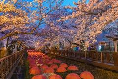 Φεστιβάλ ανθών κερασιών, Jinhae, Νότια Κορέα Στοκ Φωτογραφία