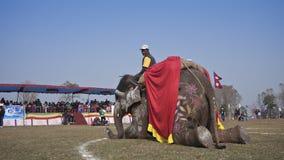 Φεστιβάλ ελεφάντων, Chitwan 2013, Νεπάλ Στοκ Φωτογραφία
