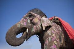 Φεστιβάλ ελεφάντων, Chitwan 2013, Νεπάλ Στοκ εικόνες με δικαίωμα ελεύθερης χρήσης