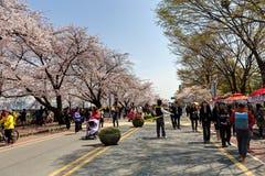 Φεστιβάλ λουλουδιών ανοίξεων της Σεούλ Στοκ φωτογραφία με δικαίωμα ελεύθερης χρήσης