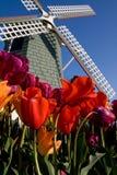 Φεστιβάλ τουλιπών Skagit, πολιτεία της Washington Στοκ Φωτογραφίες