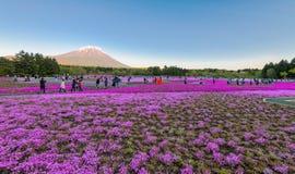 Φεστιβάλ του Φούτζι Shibazakura Στοκ Εικόνα