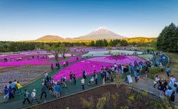 Φεστιβάλ του Φούτζι Shibazakura Στοκ Εικόνες