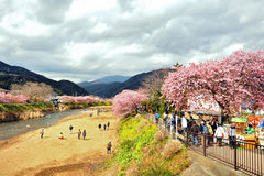 Φεστιβάλ Sakura Kawazu Στοκ Εικόνες