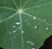 φεύγει waterdrops Στοκ φωτογραφία με δικαίωμα ελεύθερης χρήσης