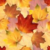 Φθινοπωρινά άνευ ραφής 05 απεικόνιση αποθεμάτων