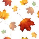 Φθινοπωρινά άνευ ραφής 06 απεικόνιση αποθεμάτων