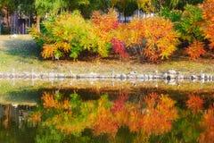Φθινοπωρινά δέντρα φανών στοκ φωτογραφία με δικαίωμα ελεύθερης χρήσης