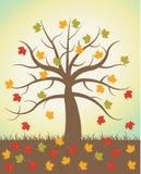 φθινοπωρινά δέντρα Στοκ εικόνες με δικαίωμα ελεύθερης χρήσης