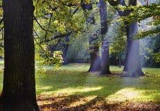 φθινοπωρινά δέντρα Στοκ εικόνα με δικαίωμα ελεύθερης χρήσης