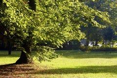 φθινοπωρινά δέντρα Στοκ Εικόνα
