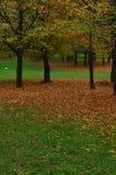 φθινοπωρινά δέντρα πάρκων Στοκ Φωτογραφία