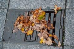 Φθινοπωρινά δρύινα φύλλα σε μια λακκούβα του νερού που εμποδίζει το α στοκ εικόνες με δικαίωμα ελεύθερης χρήσης