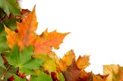 φθινοπωρινά ζωηρόχρωμα φύλλα στοκ φωτογραφία με δικαίωμα ελεύθερης χρήσης