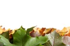 φθινοπωρινά ζωηρόχρωμα φύλλα στοκ φωτογραφία